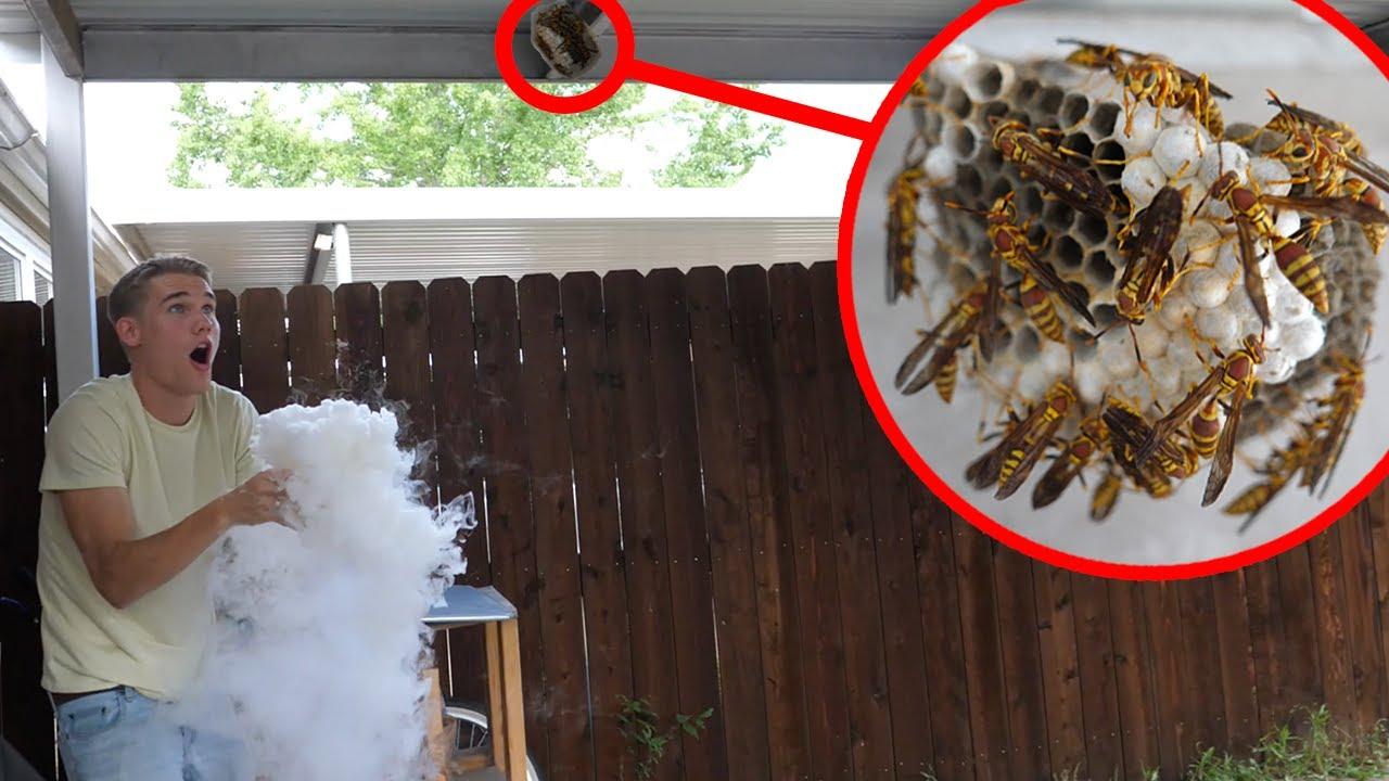 Dry Ice vs Wasp Nest 2 - Keeping Wasps as Pets
