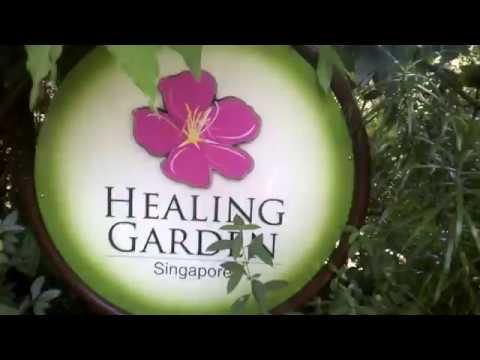 EL JARDÍN DE LA SALUD EN SINGAPUR y sus plantas medicinales. HEALING GARDEN IN SINGAPURE ✿