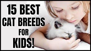 Cats 101 : 15 Best Cat Breeds for Kids