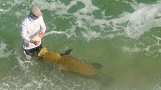 Giant Fish caught from Saltwater Jetty