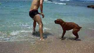 Repeat youtube video Best Boxer Dog EVER!!!