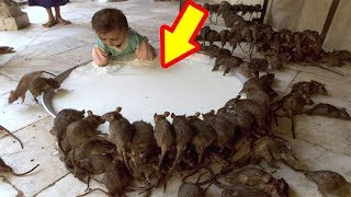3 HOME METHODS TO GET RID OF RATS ONCE AND FOR ALL | Best Health