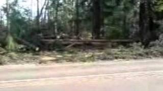 п. Сосново. Ленобласть. После урагана летом 2010.(, 2011-04-01T06:59:05.000Z)