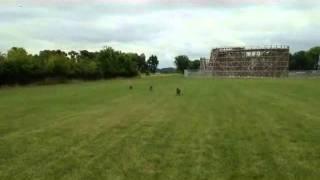 The 400 Yard Recall! | Majors Academy Dog Training And Rehabilitation