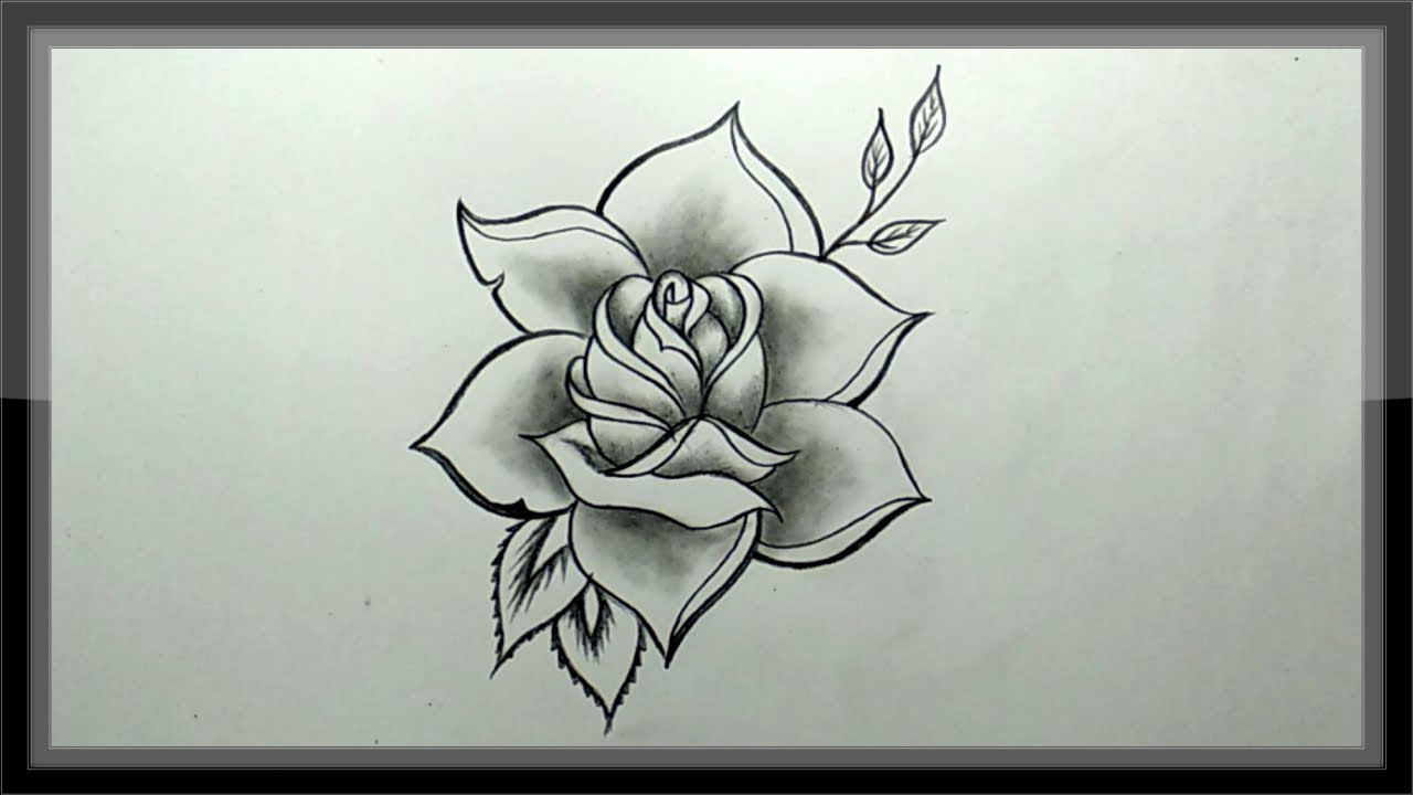 Pencil drawing a beautiful rose sketch and shading