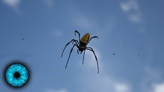 Sensation: Spinnen fliegen mit elektrischen Feldern! - Clixoom Science & Fiction
