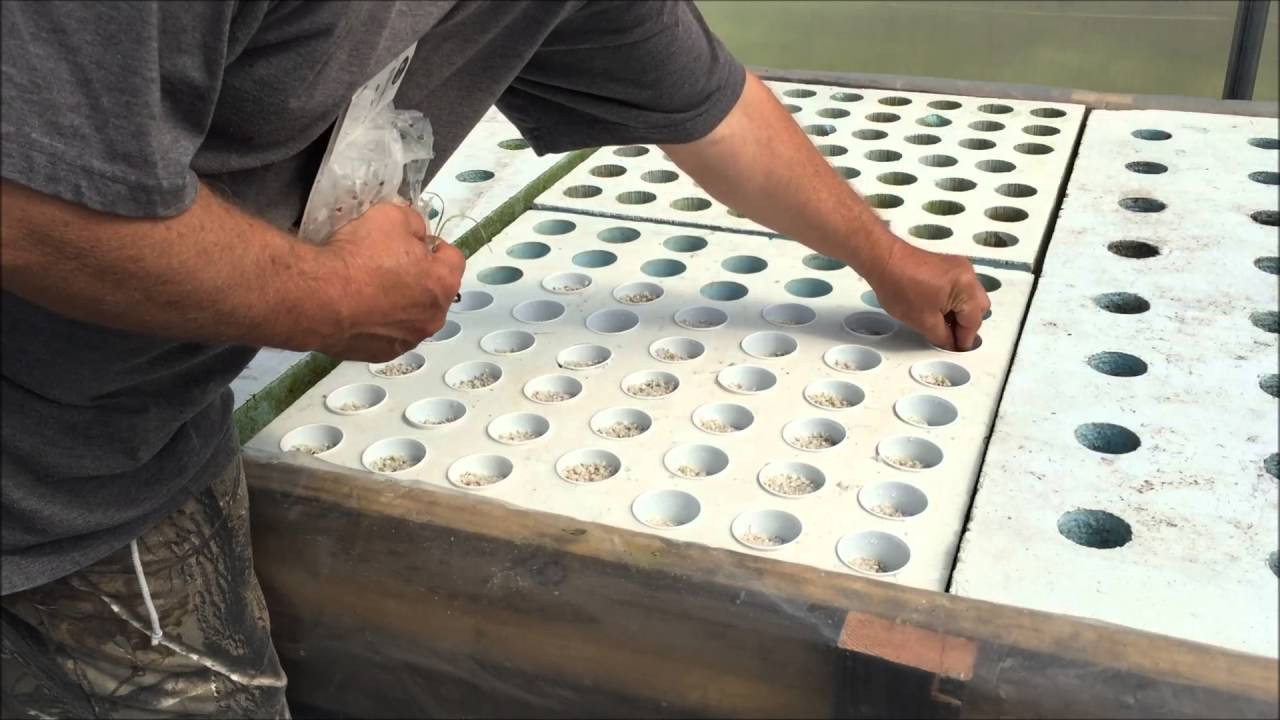 Planting onion garlic in a hydroponic floating raft bed for Hydroponic grow bed