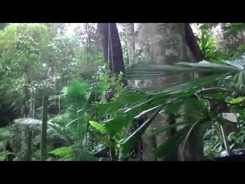 Tropical Spice Garden, Teluk Bahang, Compilation Video