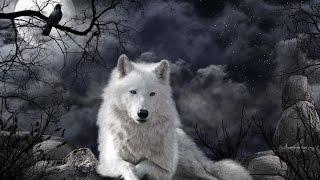 Интересные факты о волках