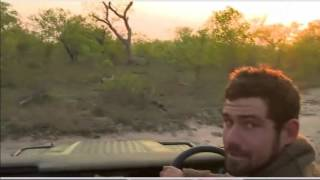Sept 29 WildEarth Safari: Scott finds the BBoys: Always look UP while tracking!!