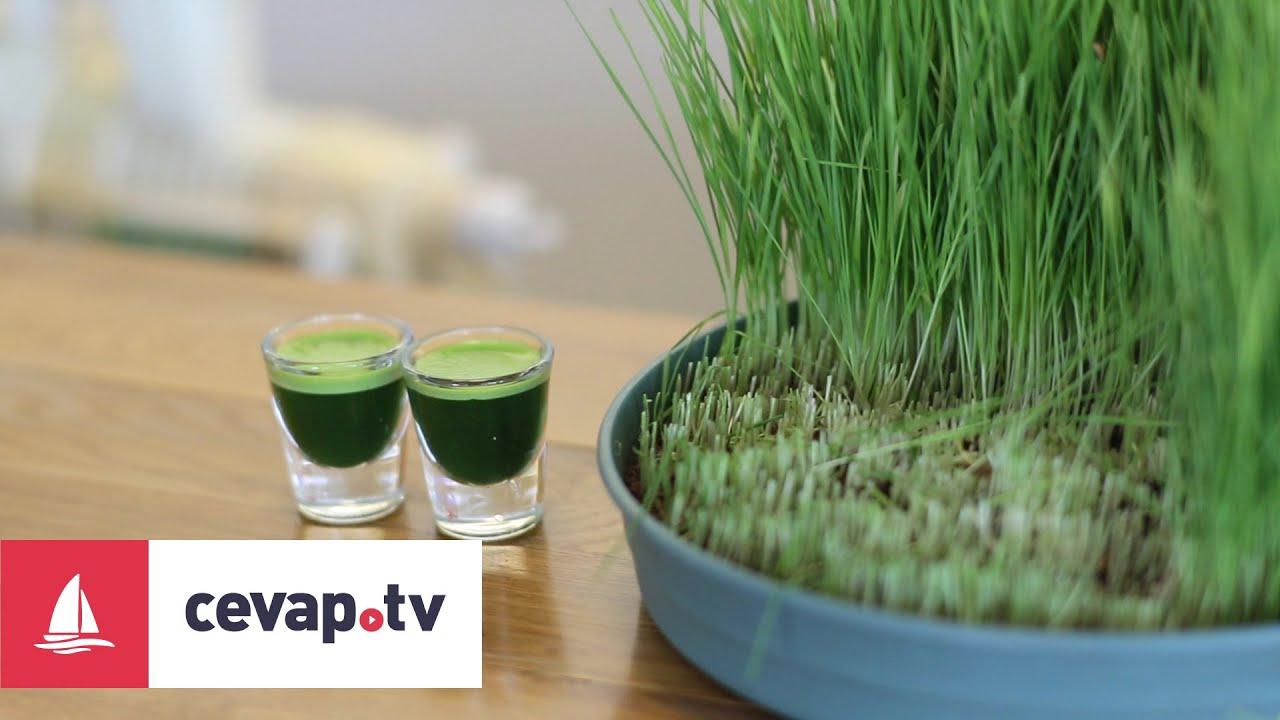 Buğday Çimi Suyunun Mucizevi Faydaları
