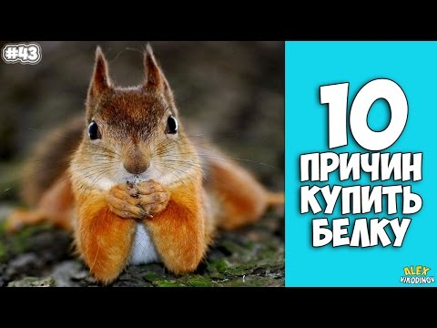 10 причин завести Белку Интересные факты!