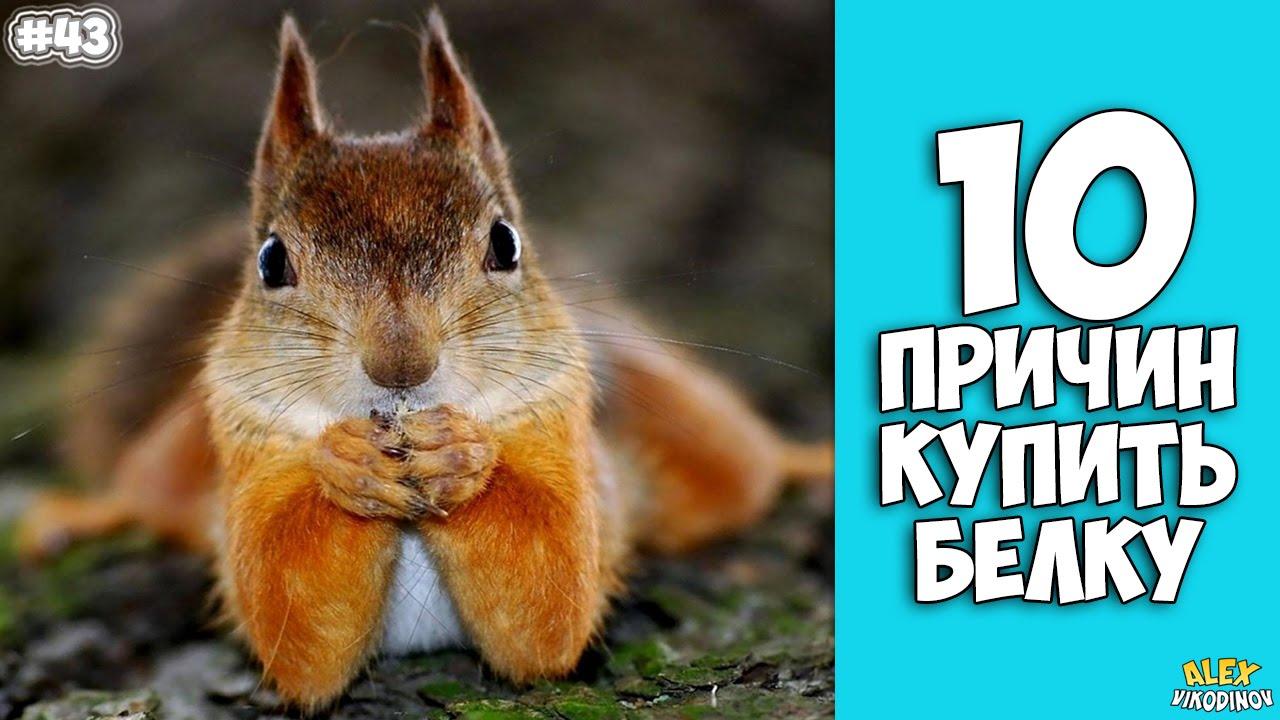 10 ПРИЧИН КУПИТЬ БЕЛКУ - Интересные факты!