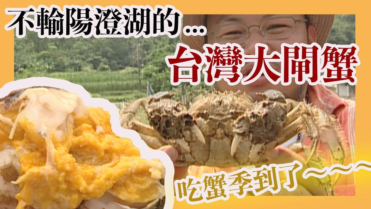 吃螃蟹的季節到囉!不輸陽澄湖的台灣大閘蟹