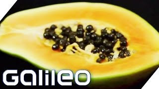 Food Upcycling | Galileo | ProSieben