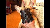 Одежда для джек рассел терьера в интернет-магазине doggy bandanas – большой выбор нарядов для активных собак по выгодным ценам.