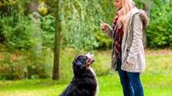 Dog Training Dayton OH