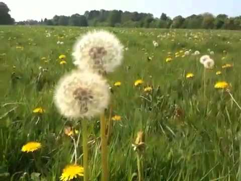 The Whatt Four - Dandelion Wine mp3