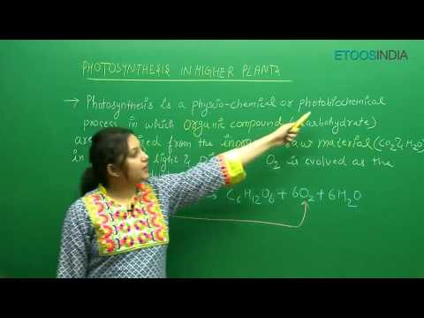 Photosynthesis In Higher Plants by Shivani Bhargava (SB) Mam (ETOOSINDIA.COM) thumbnail