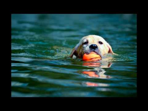 Top 10 swimming dogs