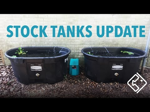 Pond & Goldfish Stock Tanks Update