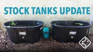 Pond & Goldfish Stock Tanks Update