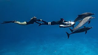 CAN YOU SEABOB WITH DOLPHINS?? Free Diving the Deep Blue Sea!!