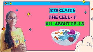 Cell : structure and function   ICSE class 6 science   all about cells for ICSE class 6 science  