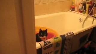 Фильм ужасов Призрак кота в ванной! =