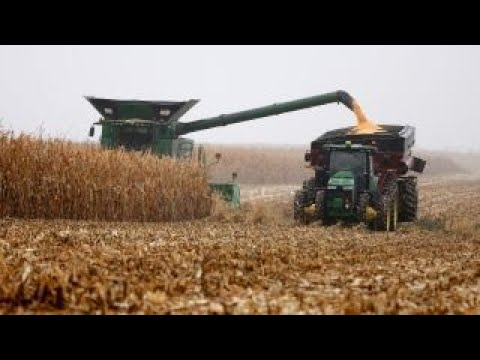 China's tariffs will cost us 100K in revenue: Soybean farmer