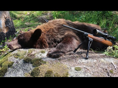 WASHINGTON FALL BEAR HUNT - CALLED IN A BEAR WITH THE FOXPRO CALLER