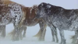 Дикие животные севера: