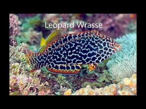 Top 10 Most Beautiful Marine Aquarium Fish
