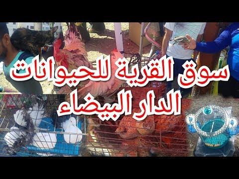 souk Qaria à Casablanca سوق القريعة بالدار البيضاء أجواء رائعة