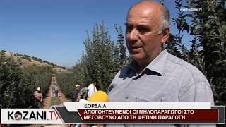 Απογοητευμένοι από την φετινή μηλοπαραγωγή οι Μεσοβουνιώτες