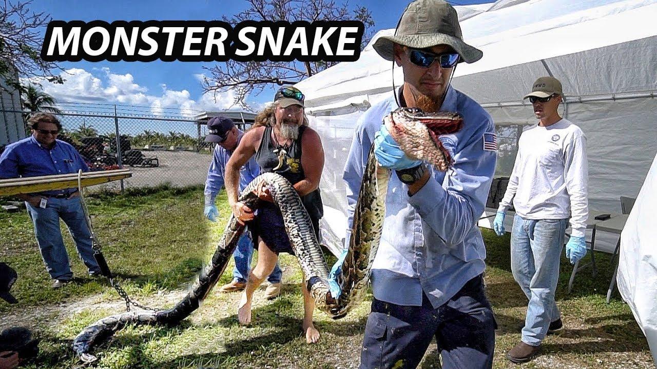 record-giant-python-in-florida-python-hunters