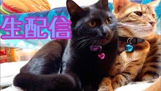 【ランチ生配信3/2】雨の日は猫でも見て過ごしませんか?生配信