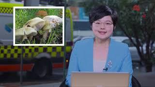 澳洲新闻| 澳最幸运商店! 连续两天售出一等奖彩票  悉尼留学生被浪卷走 时隔多天尸体浮现  别乱吃野蘑菇!新州一周已8人中毒入院