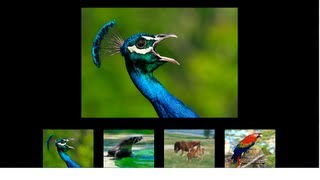 Flash CS6 Tutorial: How to create a Flash Gallery in Actionscript 3.0