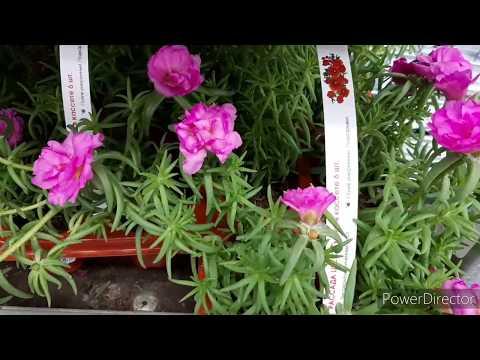 Леруа, Ашан/Орхидеи и садовые цветы/Уценки в Ашане😒☹/13.05.20.