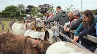 Visit The Donkey Sanctuary in Sidmouth