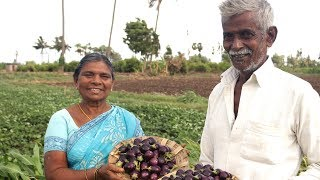 Gutti Vankaya Masala Curry-brinjal spicy curry( స్పెషల్ గుత్తి వంకాయ కూర)