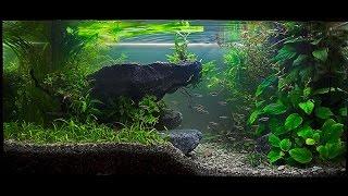 видео Обустройство аквариума