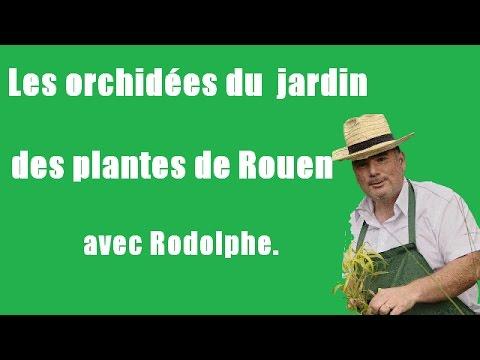Les orchid es du jardin des plantes de rouen tuto vid o - Intermarche rouen jardin des plantes ...