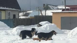 Из жизни собачей. dogs.