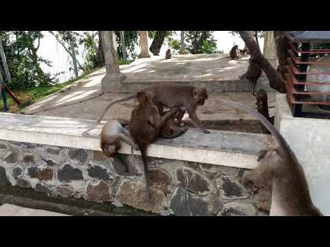 Cinta papua. Goa kreo jawa tengah