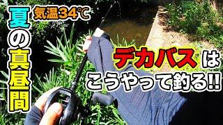 【夏のバス釣り】7月8月の野池でデカバスを釣る方法!!晴れた日中・昼間に狙い方について実践しみた【イモグラブ】【ドライブクロー】【ダムリベンジ】【熱中症注意】