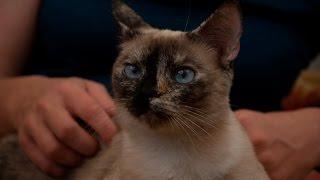 Коты из приюта - лучшие! Оксана и кошка Тома.