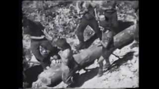 Video del 1948 sul lavoro dei boscaioli friulani