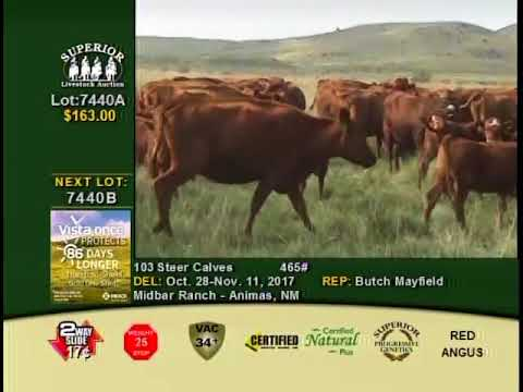 Midbar Ranch Cattle Auction 11-2017